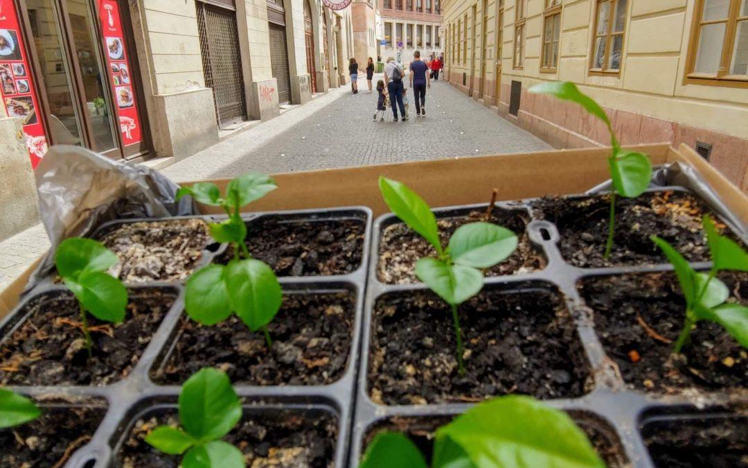 Rendkívüli: ősz közepéig tartó forgalomcsillapítás Belső-Erzsébetvárosban és Belső-T…