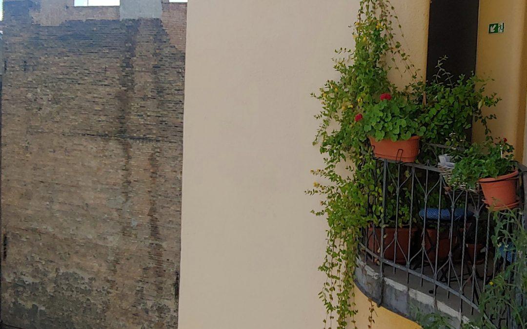 A futónövények a végtelenségbe terpeszkednek egy idilli erzsébetvárosi gangon! 💚