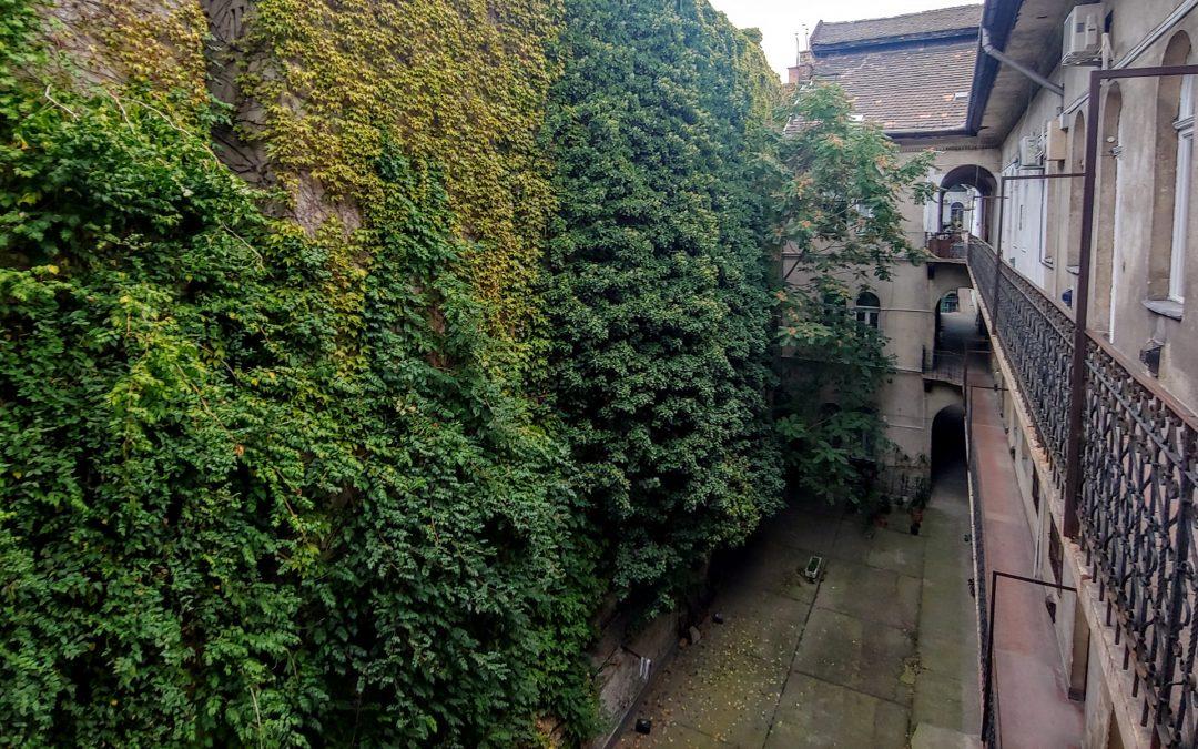 Egy nagyon zöld fal a Dob utcában, így az ősz elején! 💚