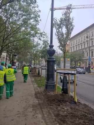Elindult az Andrássy út átalakulása! Tavaly elszállították a műgyepet, és fákat