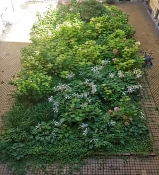 Növényes-virágos udvar a Kazinczy utcában.